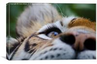 Tiger's Eye, Canvas Print