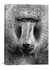 Baboon Face in Black and White, Canvas Print