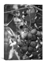 Mediterranean Grapes in Monochrome , Canvas Print