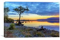Lone Tree: Milarrochy Bay, Loch Lomond, Canvas Print