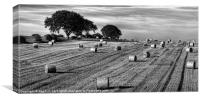 Hay Roles,black and white, Canvas Print
