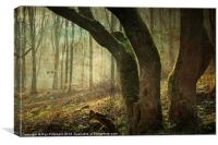 Mystic Woodland, Canvas Print