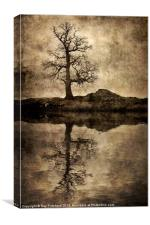 Park Brow Tree, Canvas Print