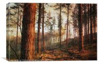 Textured Woods, Canvas Print