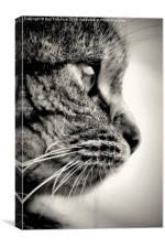 Here Kitty, Canvas Print