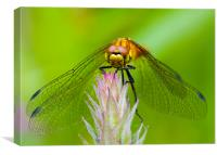 Dragonfly., Canvas Print