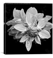 Black and white flower, Canvas Print