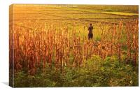 Fields of Gold, Canvas Print