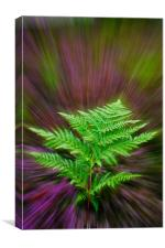 Fern and Heather, Canvas Print