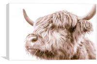 Hairy Coo Collection 3 of 7, Canvas Print