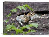 Squirrels in the shed, Canvas Print