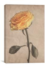 Classical Yellow Rose, Canvas Print