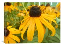 Painting of Brown Eyed Susans, Canvas Print