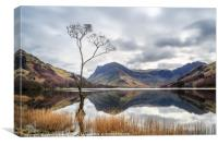 The Tree at Buttermere, Canvas Print