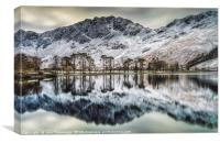The Buttermere Pines, Canvas Print
