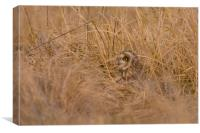 Hiding in the long grass, Canvas Print