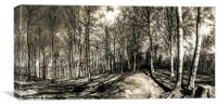 Woodland Clearing, Canvas Print