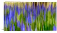 Blurred Bluebells from Maulden Woods, Bedfordshire, Canvas Print