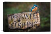 Kingfisher perched on a Private Fishing Sign, Canvas Print
