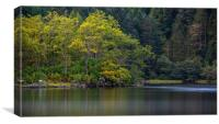 Reflections of Autumn trees in Loch Chon, Canvas Print