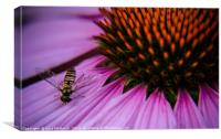 Is it a bee or a fly, Canvas Print