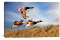 DUCKS ON THE OGMORE RIVER, Canvas Print