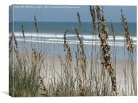 From the Grassy Dunes, Neptune Beach, Florida, Canvas Print