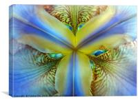 Inside of an Iris, Canvas Print