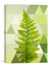 Noble fern , Canvas Print
