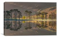 Buttermere Pines #2, Canvas Print