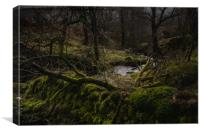 Deep in the Forest., Canvas Print