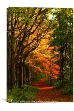 Melton Wood 2, Canvas Print