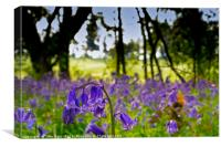 Spring Bluebells, Canvas Print
