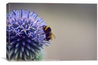 Bumble Bee & Flower, Canvas Print