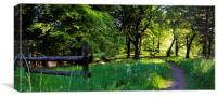 Wooded Path, Canvas Print
