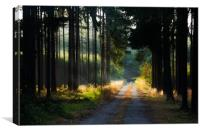 Road in morning forest, Canvas Print