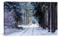 Countryside road in winter forest in national park, Canvas Print