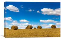 Rural nature in the farm land. Agriculture field w, Canvas Print