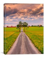 Fields of spring in Sweden, Canvas Print