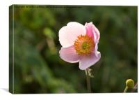 Simple Pink flower, Canvas Print