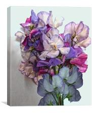 Bunch Of Sweet Peas, Canvas Print
