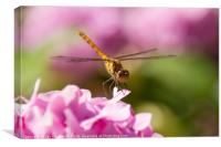Common Darter Dragonfly on Pink Hydrangea, Canvas Print