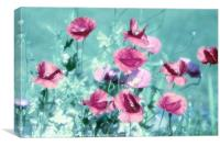Playful Poppies dreams , Canvas Print