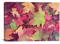 Autumn rustic colorful maple leaves background , Canvas Print