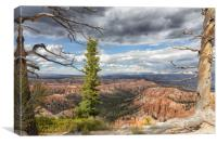 Textured trees and dark skies with view of Grand C, Canvas Print