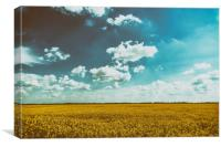 Yellow Rapeseed Flowers Field With Blue Sky, Canvas Print