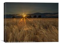 Among The Fields of Gold, Canvas Print