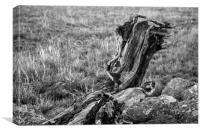 Driftwood on the banks of the River Severn, Canvas Print