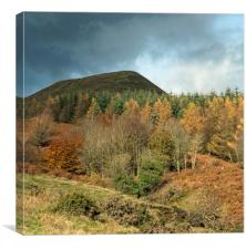 Autumn in the Beacons, Canvas Print