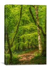 Woodland in Spring, Canvas Print